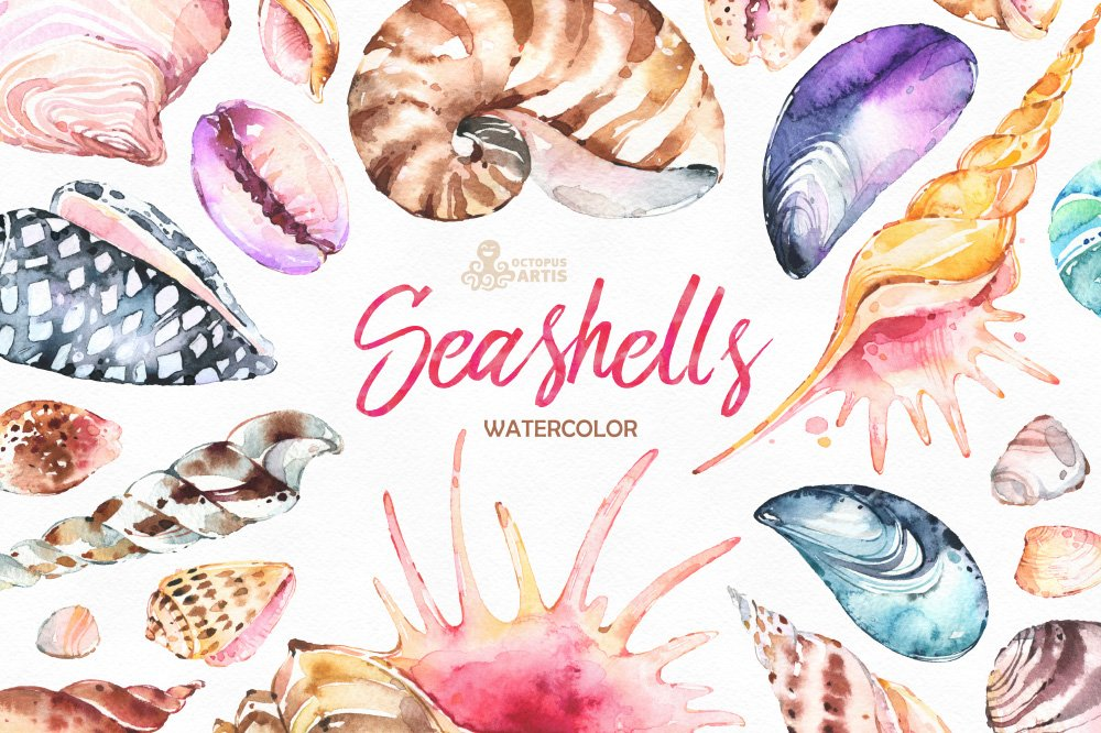 seashells watercolor collection graphic objects creative market