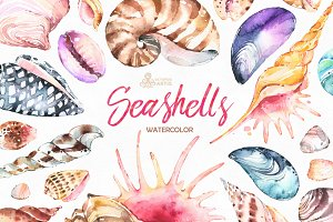 Seashells. Watercolor collection