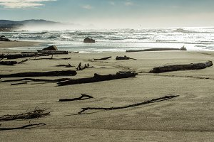 Sandy beach with driftwood logs
