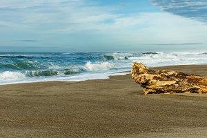 Sandy beach with driftwood log