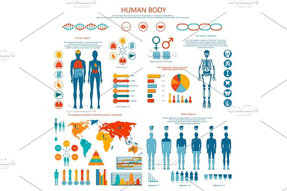 Concept of Human Body Colored Infographic Cartoon in Graphics