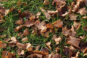 Leaves On Grass