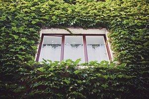 Leaves around Window