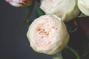 Peony roses Bombastic