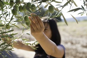 Hand holding olive branch