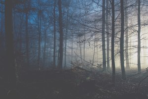Foggy Forest in Blue Light