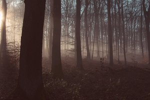 Foggy Morning Light in the Forest