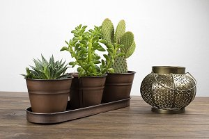 Plant and cactus next to a watering can and decoration object on wooden table. Decor.