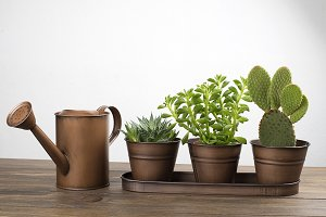 Plant and cactus decoration next to a watering can on wooden table. Decor.
