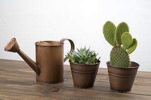 Plant and cactus decoration next to a watering can on wooden table.