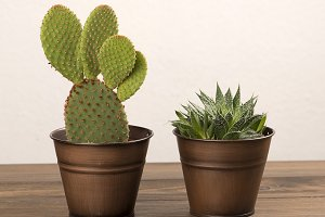 Cactus and plant decoration on wooden table. Decor.