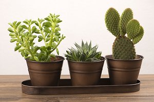 Cactus and plant decoration on wooden table.