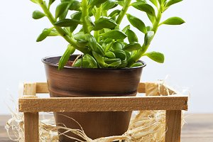 Close-up plant on wooden table. Decor.