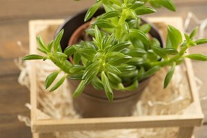 Top view of plant on wooden table. Decor.