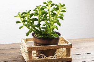Plant on wooden table. Decor.