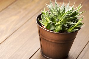 Cactus on wooden table. Decor.
