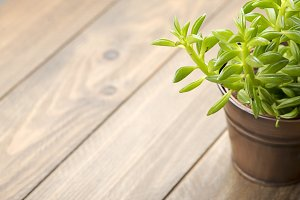 Decoration plant on wooden table. Copy space.