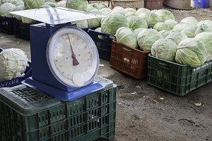 Sale cabbage in the market