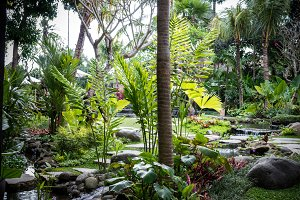 Lush tropical garden with assorted colorful flowers and plants. Bali island, Indonesia.