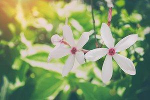 Beautiful white flower