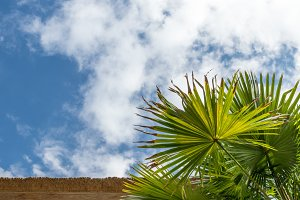 Palm green leaves in tropics, natural texture. Palm and sky background. Bali island.