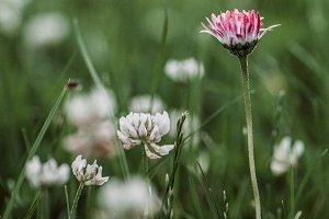 Most Beautiful Flower In The Garden