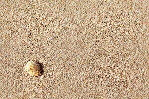 Texture of wet sand from above.