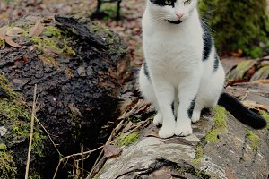 Black and White Cat on a Log
