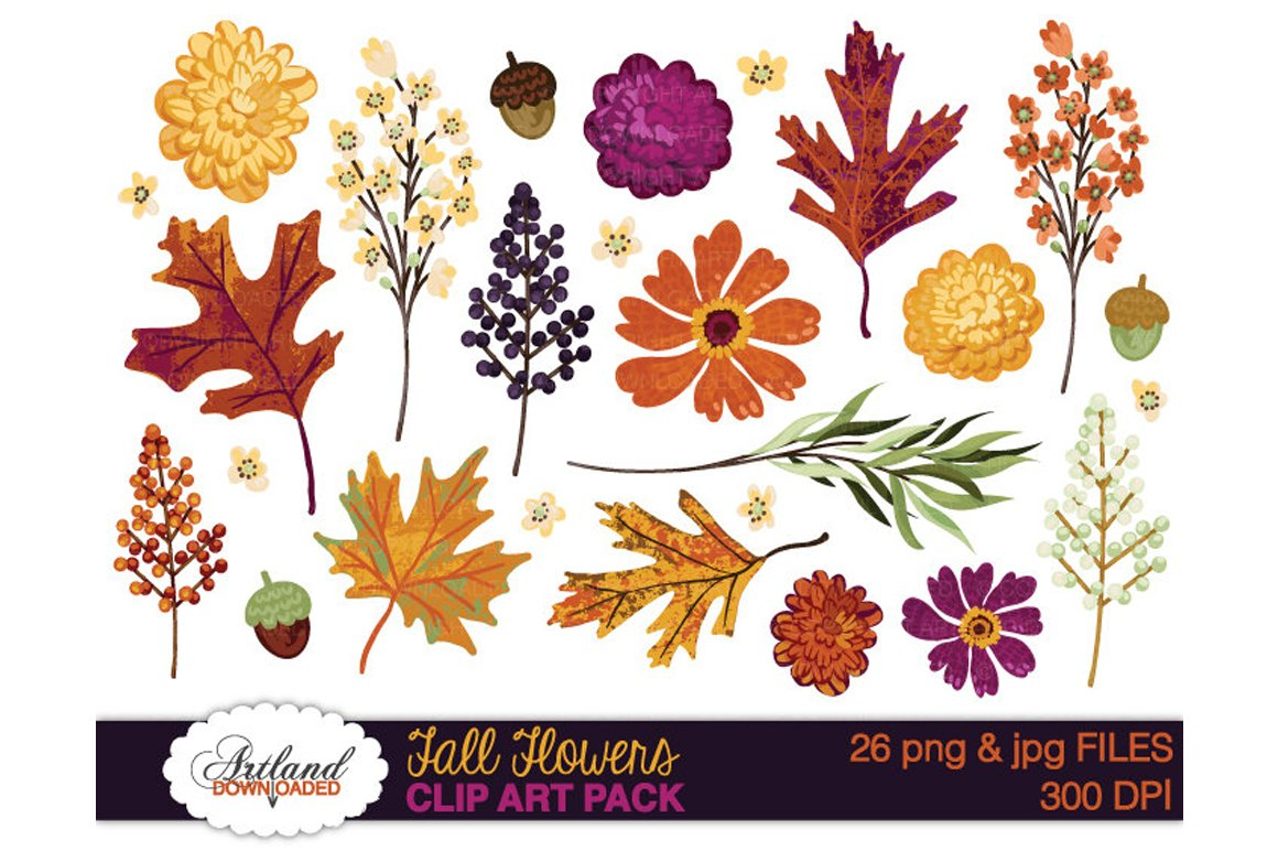 Fall Flowers Clipart Pack ~ Illustrations ~ Creative Market