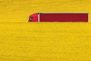 Red truck on yellow rapeseed