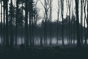 Dark Moody Forest