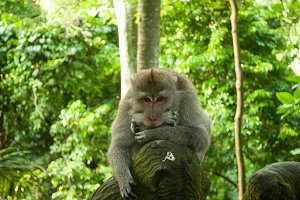 Wise monkey in the forest