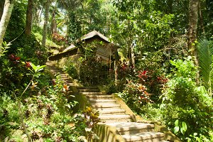 Cabane in the jungle
