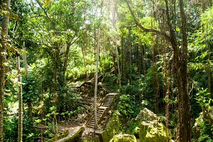 Stairs in the jungle