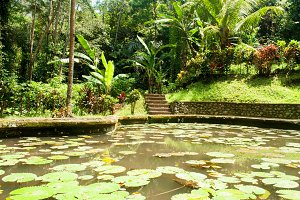 Tropical pond with water lilies