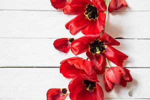bouquet of red tulips on white wooden background,
