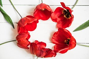 Red tulips in a circle on white wooden background