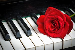 piano keyboard and rose