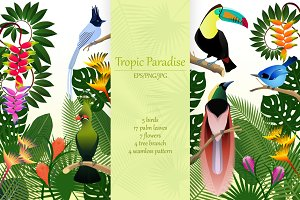 Tropical birds collection