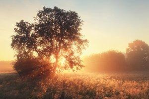 Morning sun shine