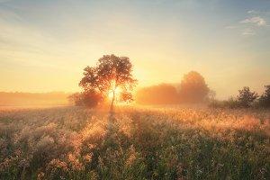 Morning autumn scene