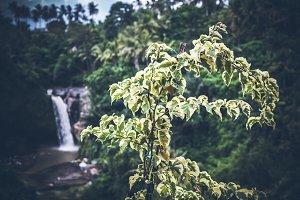 Waterfall deep in the tropical rain forest of Ubud, tropical Bali island, Indonesia. Exotic scene of tropics.