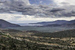 Olive trees in Delphi, Greece