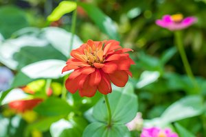 Beautiful floral flowers background, outside nature flowers in the park of Bali island, Indonesia.