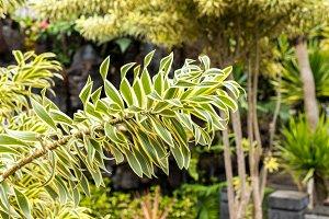 Exotic tropical background pattern, Bali island, Indonesia.