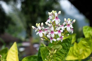 Flowers background outdoors, Bali island, Indonesia.