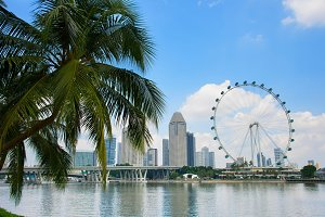 Singapore Flyer and palm tree