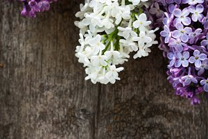 Lilac on wood