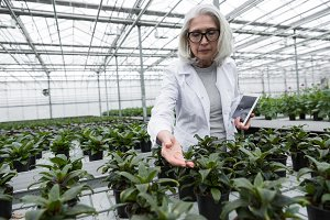 Concentrated mature woman standing in greenhouse