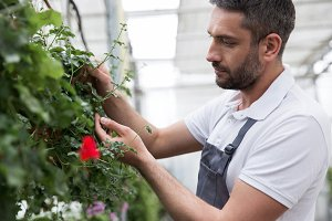 Concentrated young bearded man standing in greenhouse